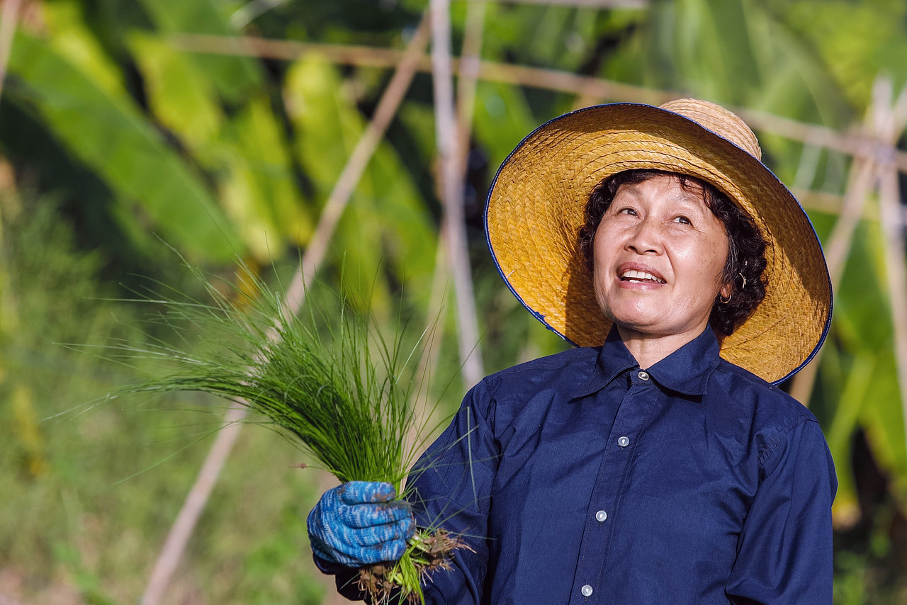 Photo: GIZ: Sustainable rice cultivation